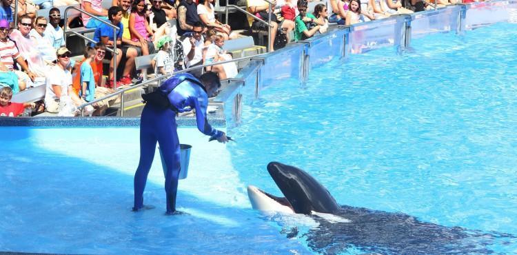 6 Reasons Why SeaWorld Should Keep its Orcas