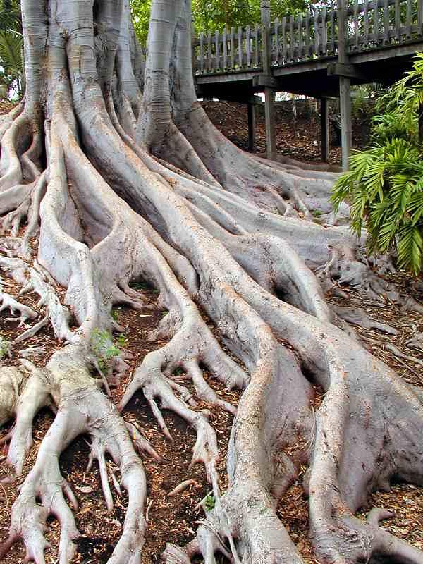 Tree: a poem
