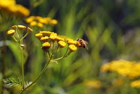 Bee: a soliloquy