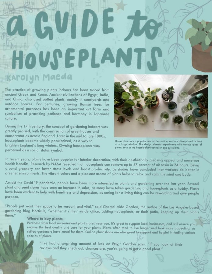 Beginning Journalism Project - A Guide to Houseplants